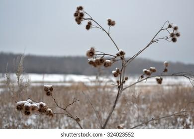 Herbs in winter field dry grass white snow