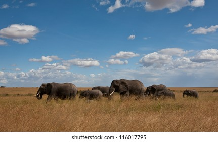 A herd of African Elephants moves across the savanna. Serengeti National Park, Tanzania.
