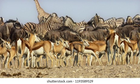 Herd of animals undertake long journeys in search of water. Migration of animals in the African savannah.