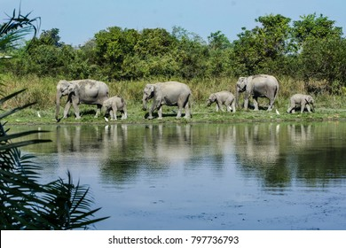 A herd of Asian elephant (Elephas maximus) were visiting their territory at Kaziranga National Park, Assam, India. The calf on the top right side was very curious to explore more.