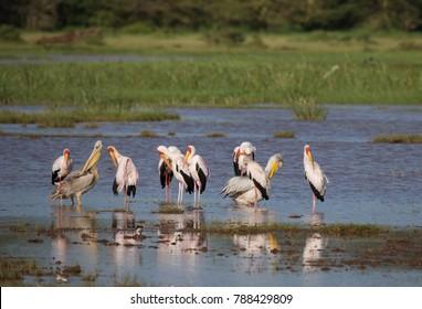 Herd of birds in african lake