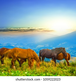 a herd of brown horses grazing on a mountain pasture