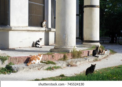 herd of cats in city setting
