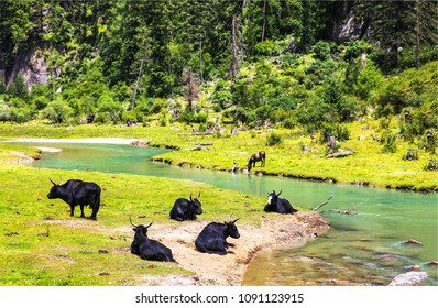 Herd of cattle at valley river landscape. Horse and cattle herd in pasture. Cattle farm view