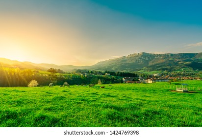 Herd of cow grazing at grass field with beautiful blue sky and morning sunlight. Cow farming ranch. Animal pasture.  Landscape of green grass field and mountain near village. Grassland in spring.