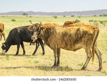 Cow Angry Images, Stock Photos & Vectors | Shutterstock