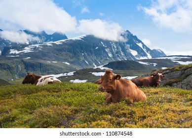 Herd of cows on green meadow