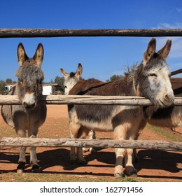 herd of curious donkeys