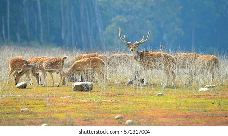 herd of deer grazing in bush at Jim Corbett National Park, India