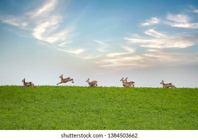 Herd of deer grazing in green spring meadow.