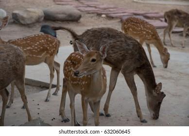 Herd of deers in the zoo