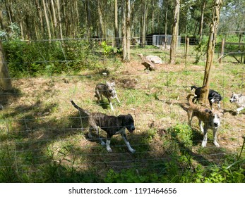 herd of dogs agitated and barking in the forest