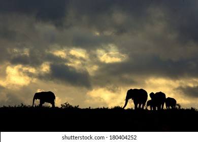A herd of elephant against a perfect South African sunset sky.