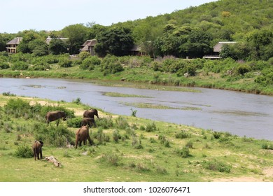 A herd of elephant grazing at the side of a river