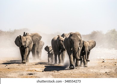 A herd of elephants approaches a waterhole in Etosha national park. Northrtn Namibia, Africa.