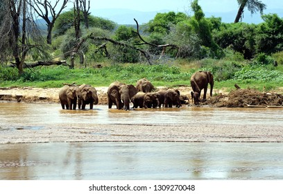 Herd of elephants bathed in a river at Samburu national park, Kenya