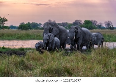 herd of elephants crossing water, herd of elephants in sunset, elephant family with baby elephants in sunset