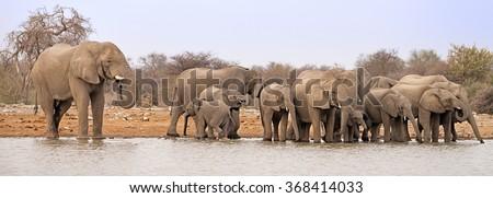 Herd of elephants (Loxodonta africana) drinking and bathing at a waterhole in Etosha National Park, Namibia