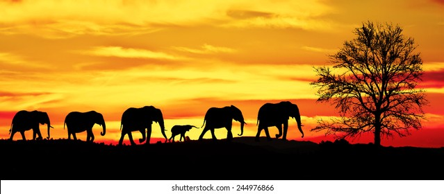 herd of elephants in the mountains