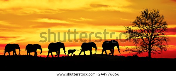 silhouette of herd of elephants in the mountains for wall murals