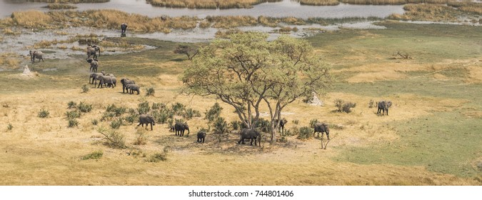 Herd of elephants in the Okavango Delta (aerial view from a helicopter)