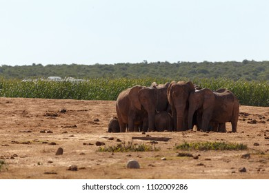 Herd of Elephants standing together at the dam