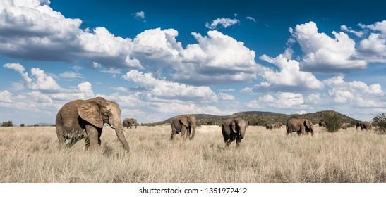 A herd of elephants walking over an open plain.
