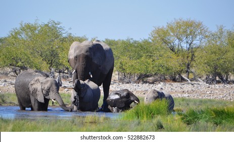 A herd of elephants at a watering hole in Namibia Africa