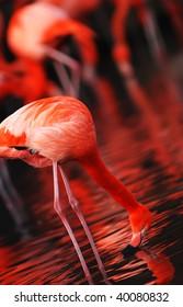 Herd of flamingos