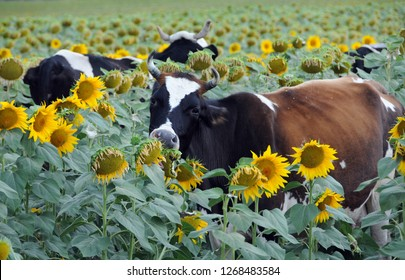 Herd of flowers in the field of sunflowers in the summer