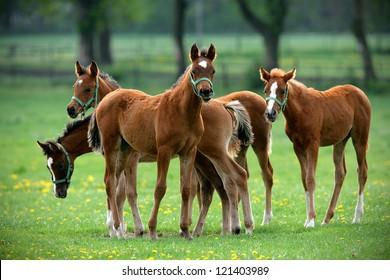 herd of foals in the pasture