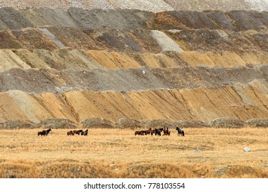 Herd of Free-Roaming Wild Feral Horses in Highland Valley, Thompson-Nicola Regional District, British Columbia, Canada