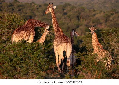 Best Zoos of South Africa Images, Stock Photos & Vectors