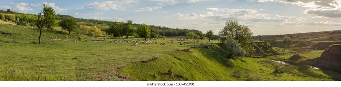 A herd of goats and sheep.  Animals graze in the meadow. Mountain pastures of Europe.