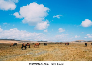 A herd of hores feeding in the grassland against hills and mountains, inner mongolia,China