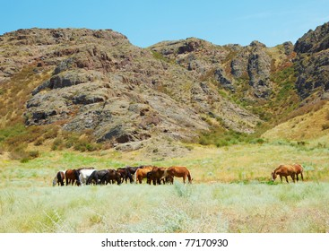 Herd of horses against mountains