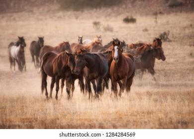 Herd of horses in dry grasses of New Mexico
