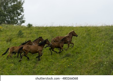A herd of horses galloping across the field quickly