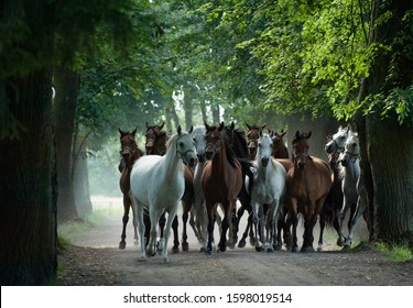 A herd of horses galloping along a countryside road