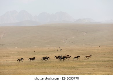 A herd of horses gallops across the steppe at Song Kul Lake in Kyrgyzstan