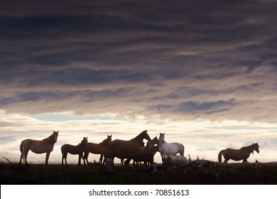 herd of horses grazing in a field at sunset