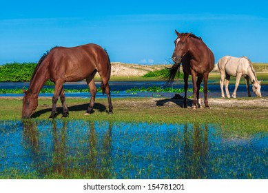 Herd of horses grazing in the flooded meadow