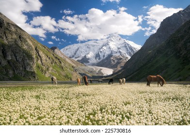 Herd of horses grazing in picturesque mountains in Kyrgyzstan
