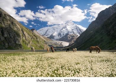 Herd of horses grazing in picturesque mountains in Kyrgyzstan