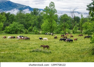 Herd of horses in the Great Smoky Mountains of Tennessee