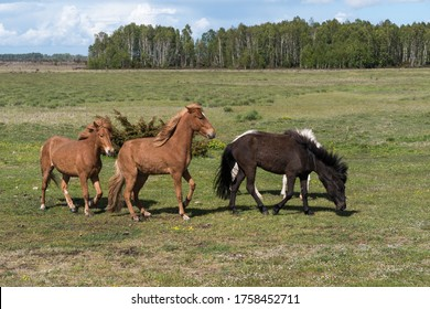 Herd with horses in a green landscape on the island Oland in Sweden