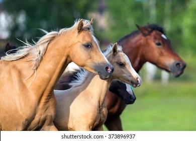 Herd of horses. Group go horses. Horses running in field in summer.