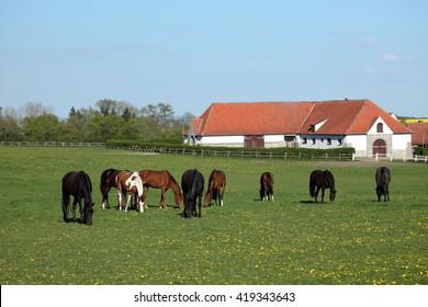 A Herd of Horses at a Horse Farm