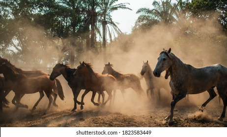 a herd of horses in the middle of a cloud of dust, white, black, small and large horses.