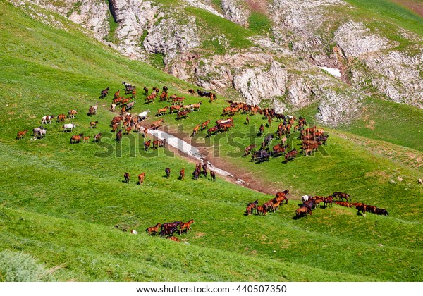 herd of horses in mountains are grazed on a glade a look with top